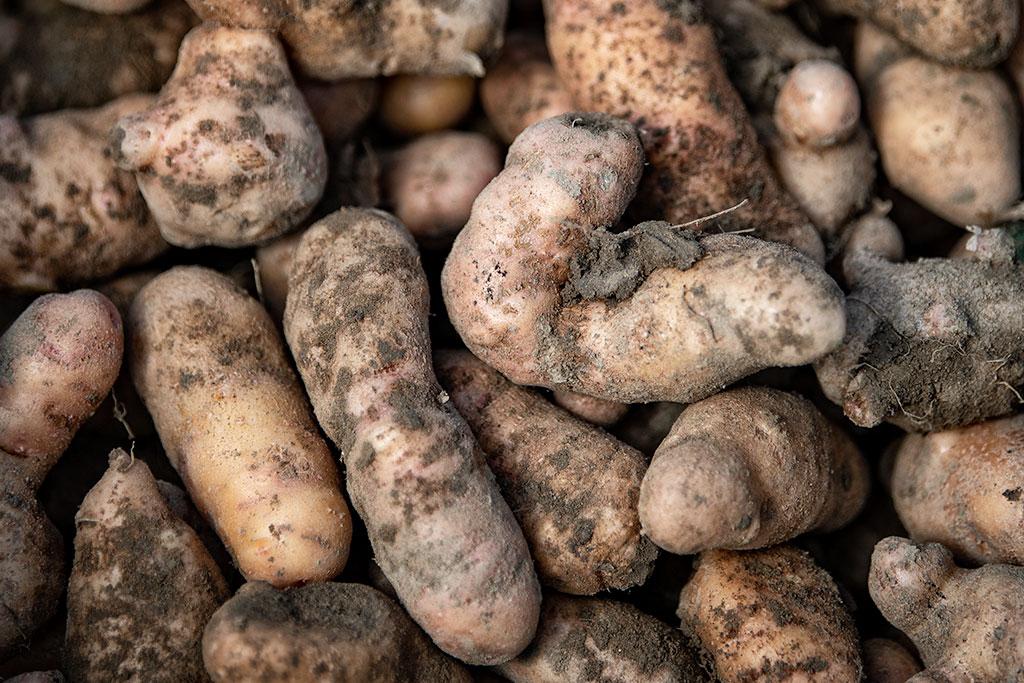 Kulipedia Kartoffel